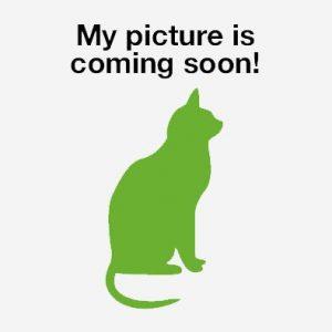 cat-image-coming-soon-compressor